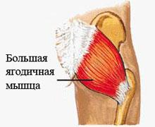 Большая ягодичная мышца