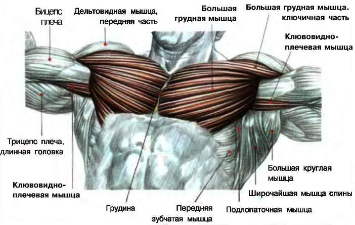 Накачать грудь