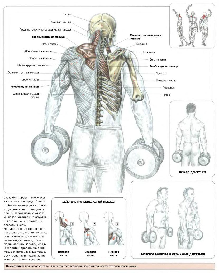 Схема по наращиванию мышц